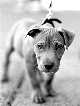 cute-pup