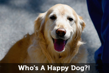 make-google-happy