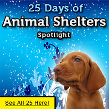 25-animal-shelters