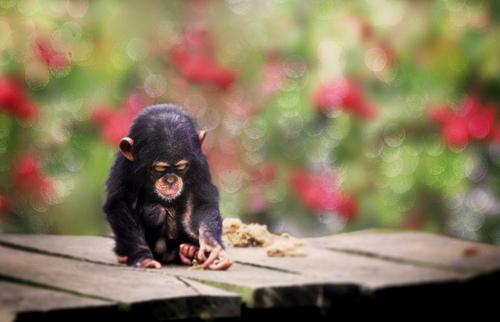 Sweet lil Monkey