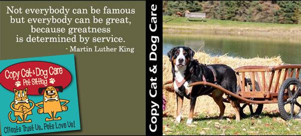 copy cat and dog header