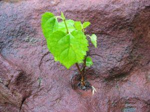 credible-plant