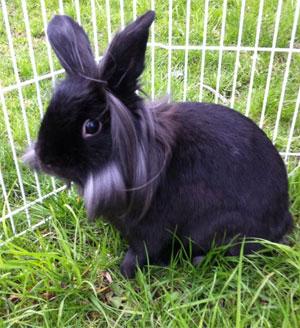 bunny rescue