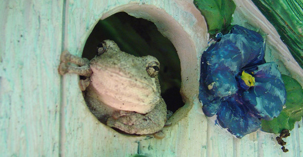 frog in a tree