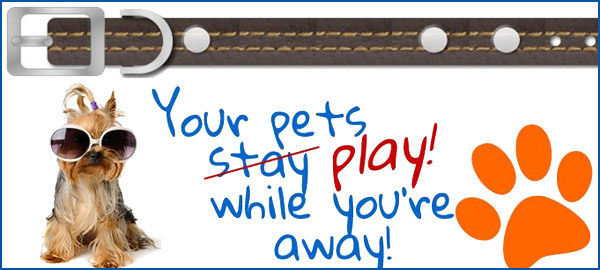 Paws Pet care at Home Banner